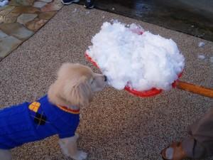 ゴールデンレトリバー愛犬レオ 子犬時代 雪かき
