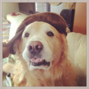 ゴールデンレトリバー愛犬レオ 帽子をかぶせてみた