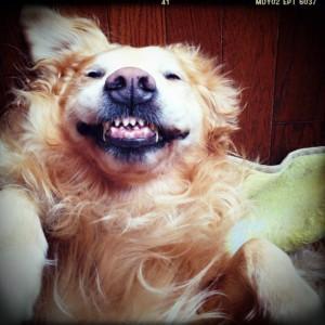 ゴールデンレトリバー愛犬レオの寝相